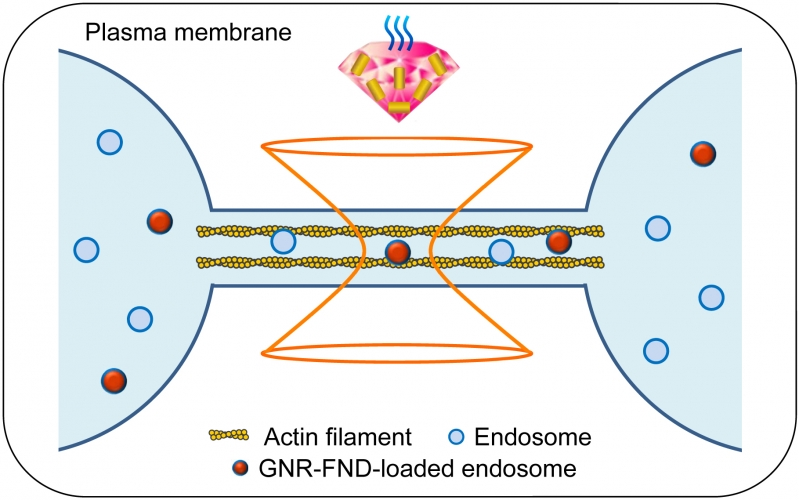 Measuring Nanoscale Thermostability of Cell Membranes with Single Gold-Diamond Nanohybrids